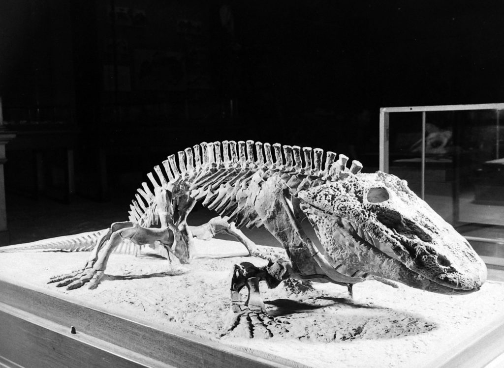 The American Museum of Natural History Dinosaur exhibit in New York, 1939.