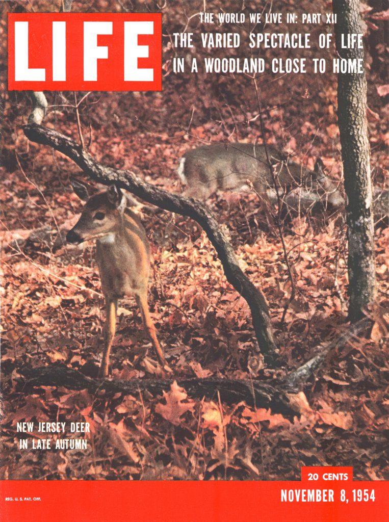 November 8, 1954 cover of LIFE magazine