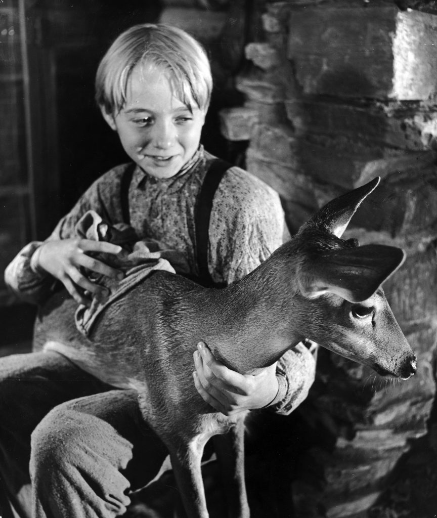 "Actor Claude Jarman Jr. holding a baby deer for a scene in the movie ""The Yearling,"" 1947."