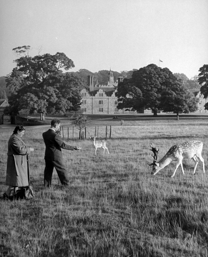 Two men feeding deer on the 1000 acre park at Knole, the ancestral estate of Lord & Lady Sackville, 1949.