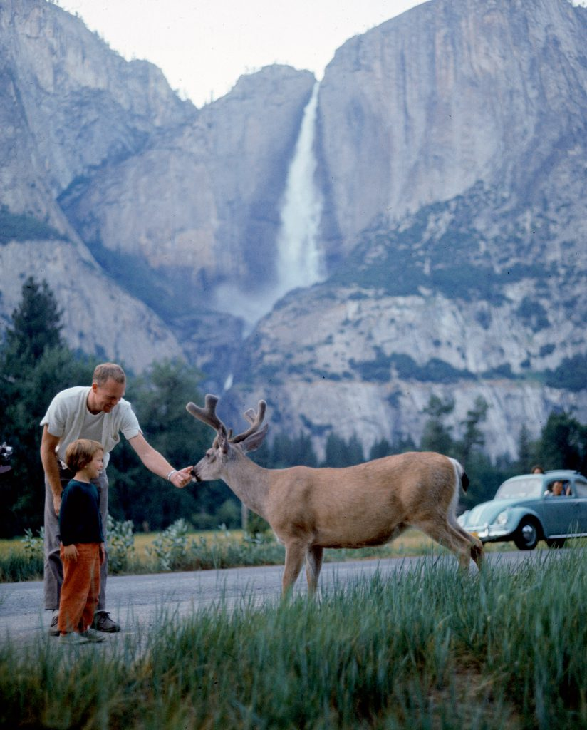 Father and son feeding a wild deer in Yosemite National Park, 1962.