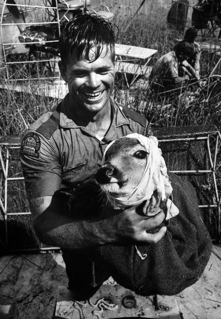 Park ranger holding deer rescued from flooded section of the Everglades, 1966.