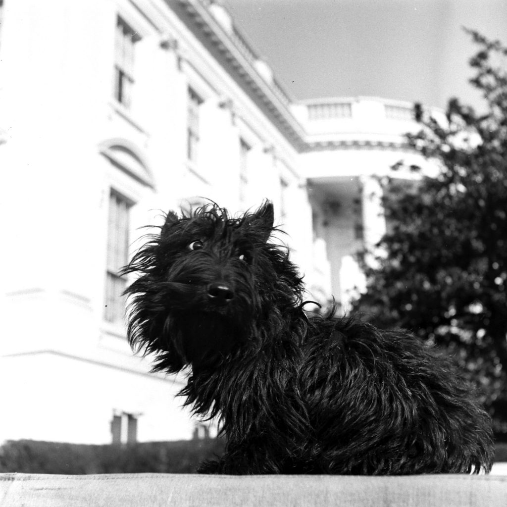 Fala at the White House, 1941.