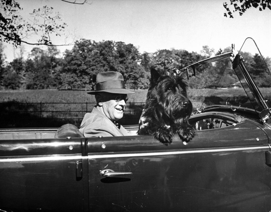 President Franklin D. Roosevelt driving in his convertible with his dog Fala through Hyde Park, 1944.