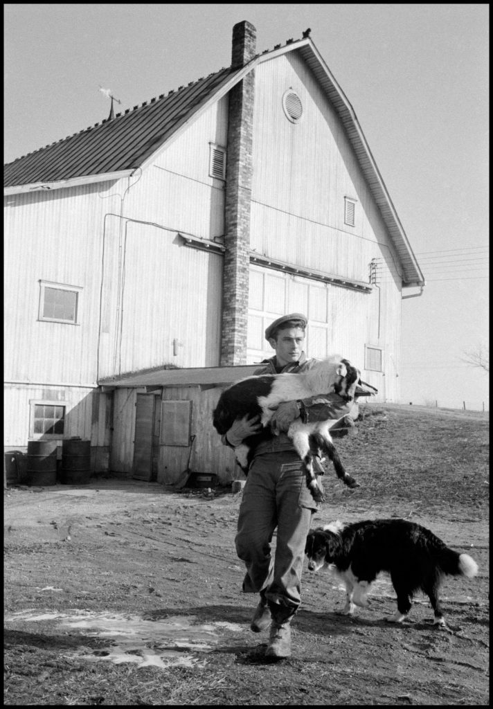 James Dean with dogs on Winslow farm in Fairmount, Indiana. 1955.