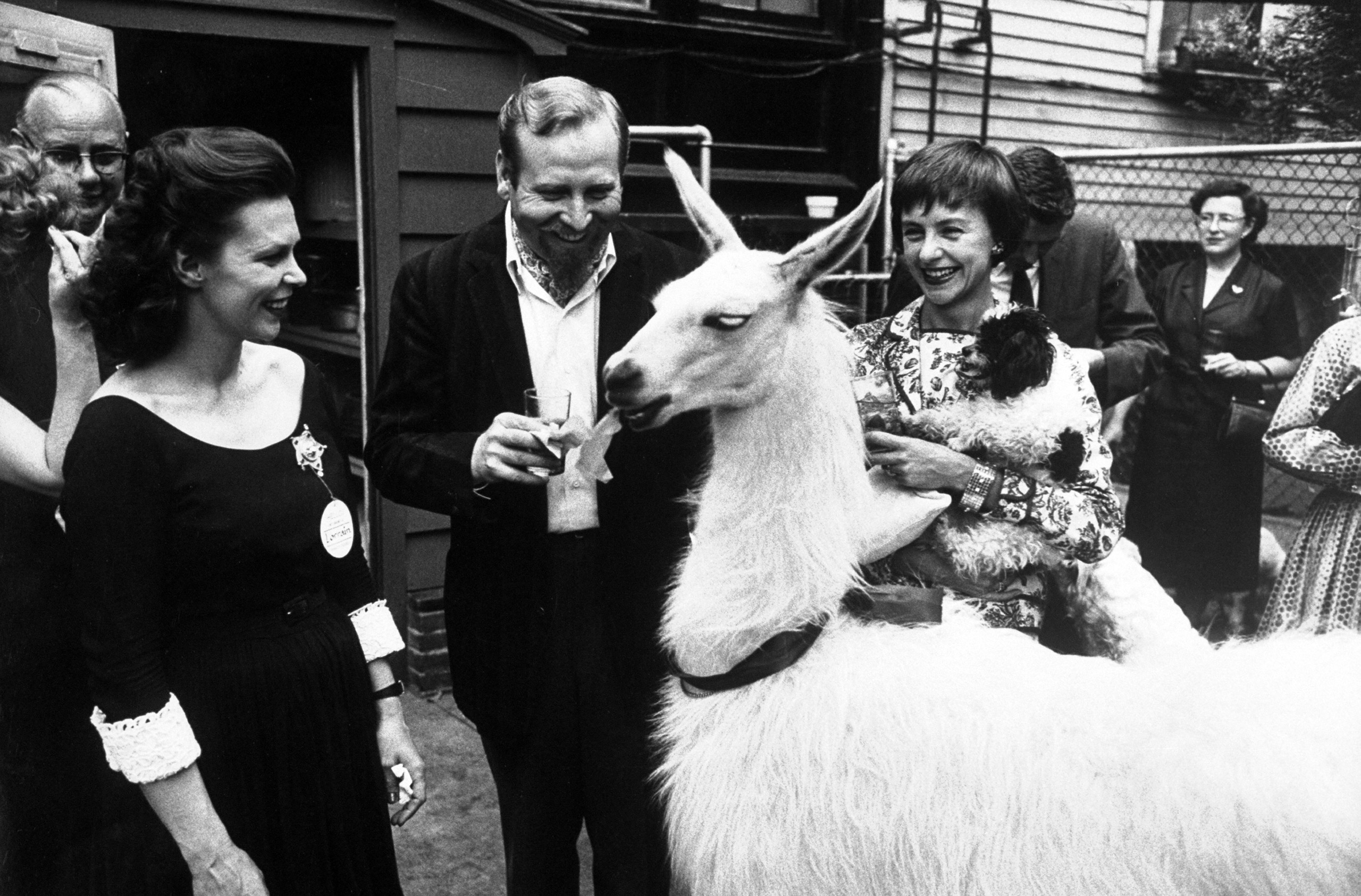 Kangaroo and Llama Party 1959