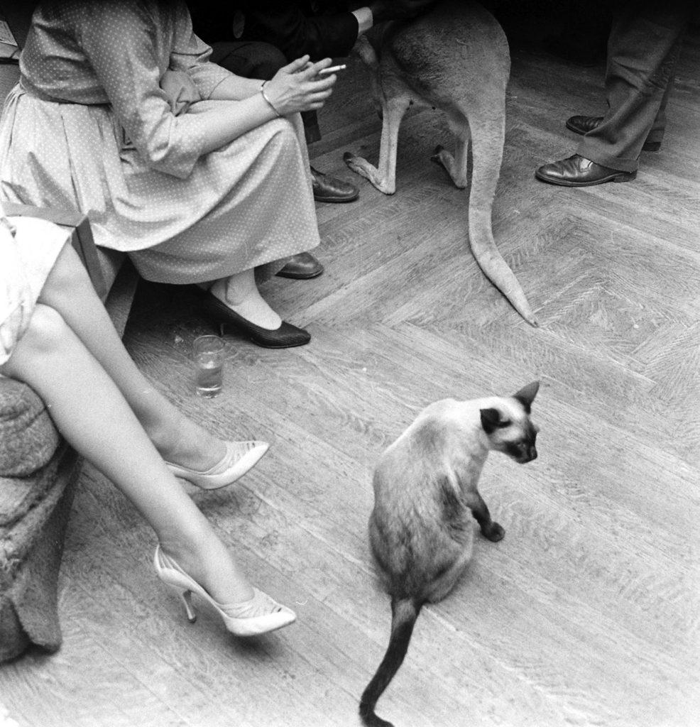 Kangaroo and Llama Party 1959