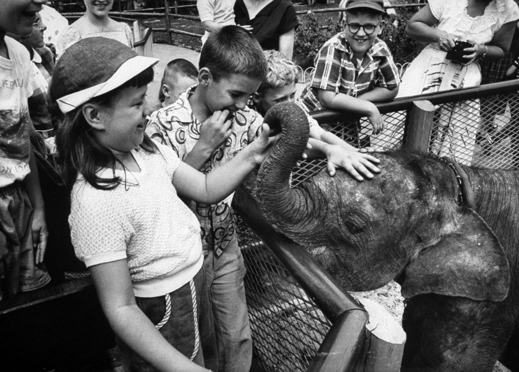 """Unsuspecting elephant is worked over by the youngsters, who stood in line to give him a careful hand examination. """"He feels funny,"""" one remarked."""