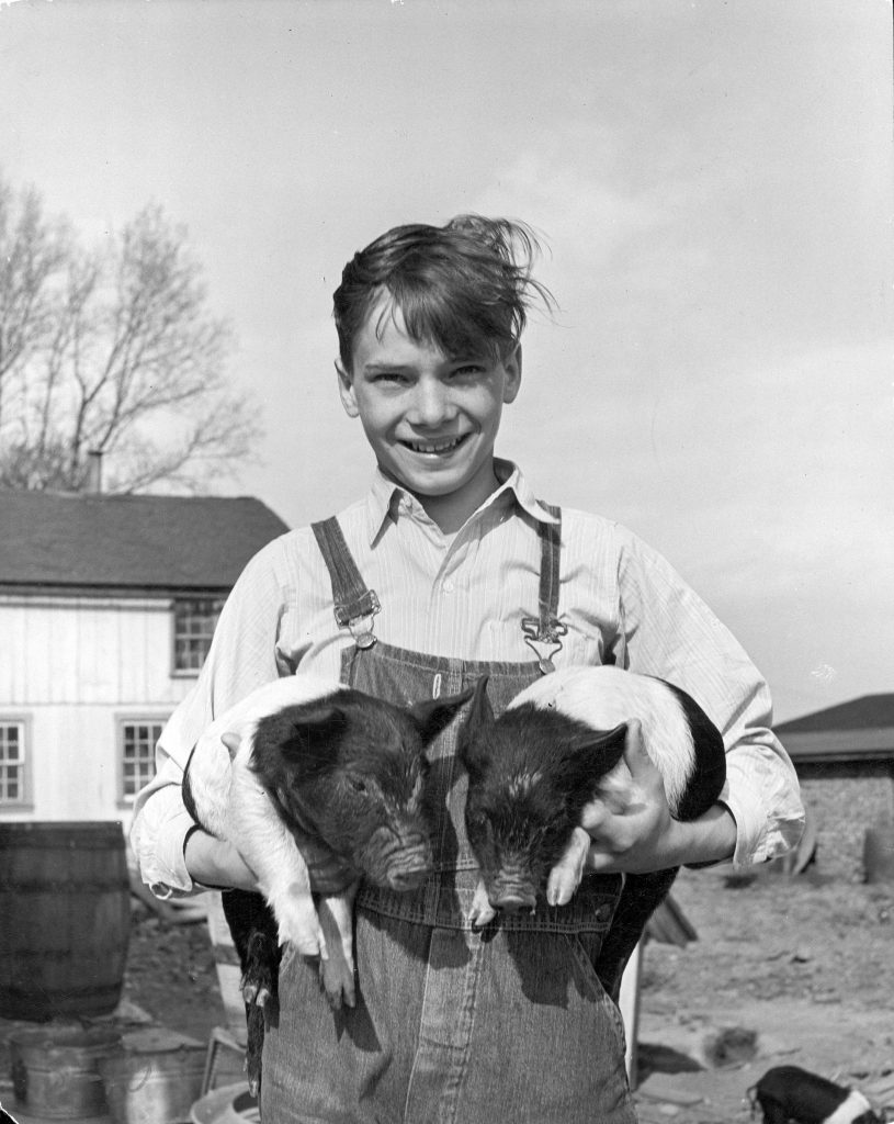 A farmer's son holding a pair of Hampshire piglets on farm in Lancaster County, Pennsylvania, 1943.