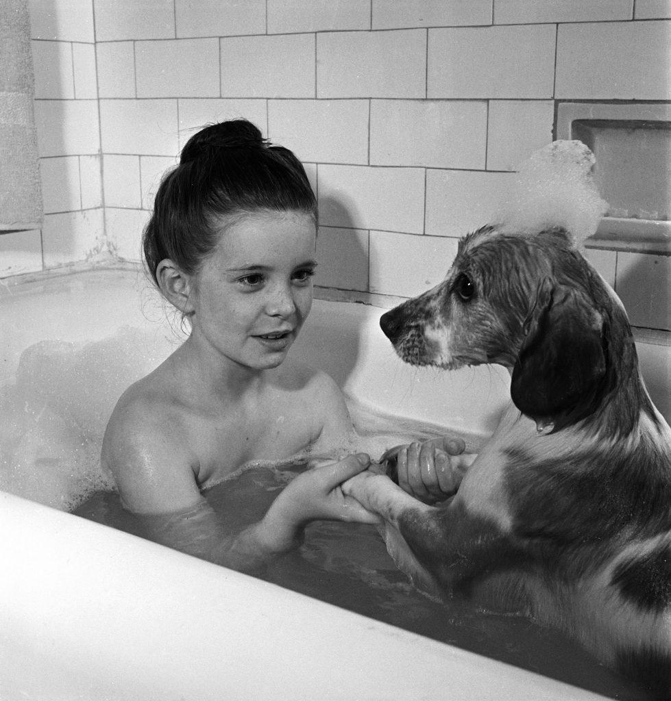 Child actress Margaret O'Brien and her spaniel pet Maggie sharing a bubble bath, Los Angeles, Calif., 1944.