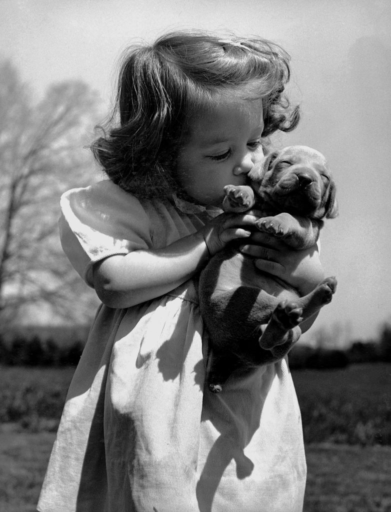 Christina Goldsmith tenderly kissing a Weimaraner puppy, which she took from a new litter of her breeder father's stock, 1950.
