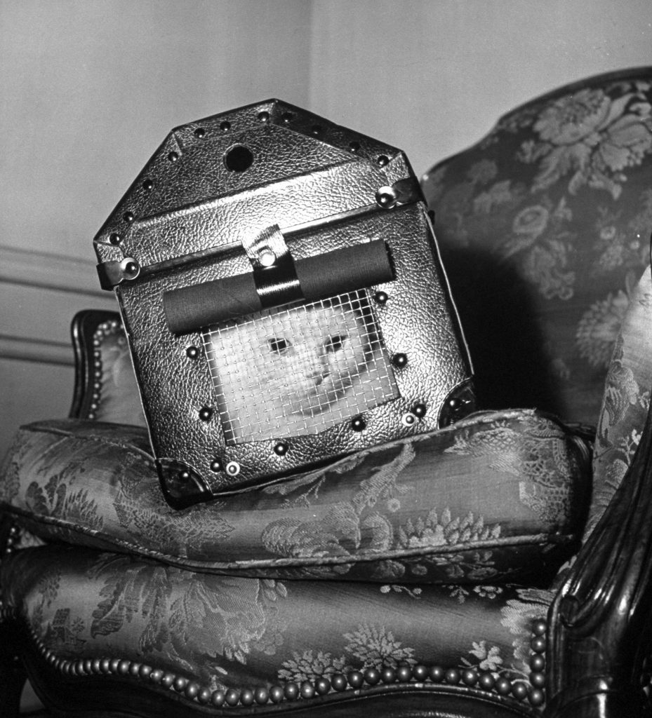 A cat in a carrier during an air raid, 1941.