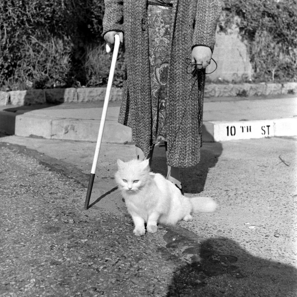 Baby the Seeing Eye Cat, 1947.