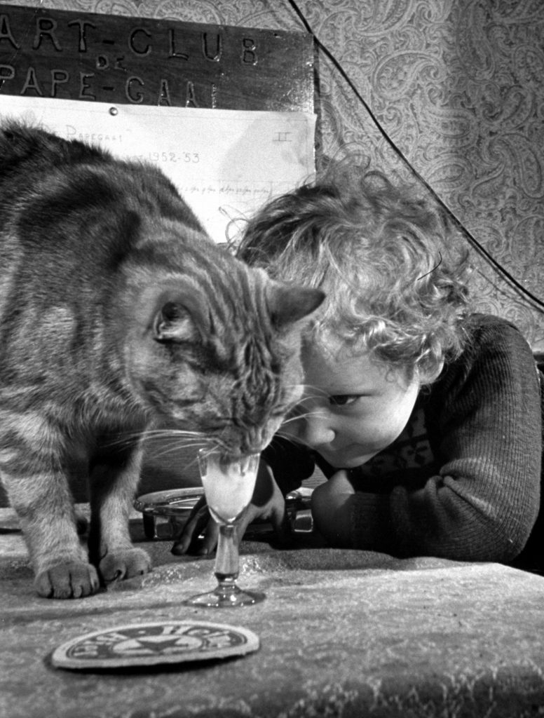 Dutch billiards prodigy Renske Quax feeding cream to his cat, 1953.