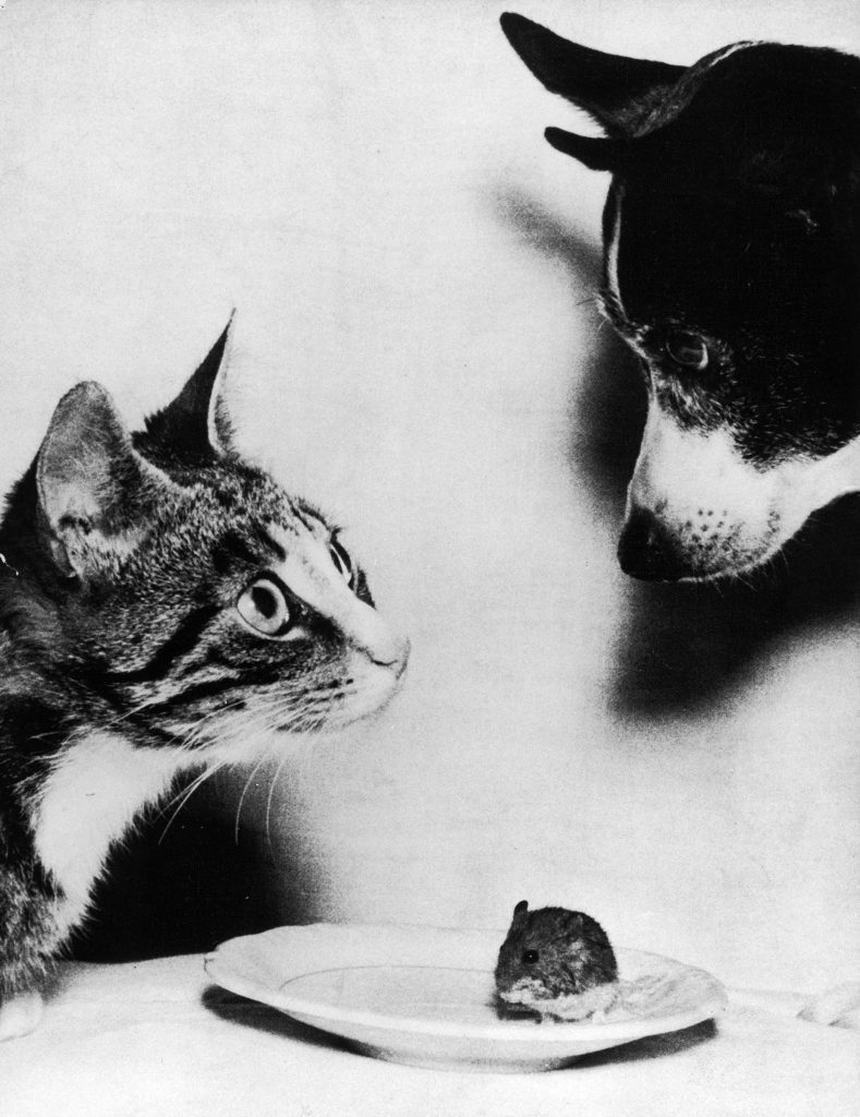 Pets of the Lyng family, Mitten the cat, Tosen the dog and an unnamed mouse, 1955.