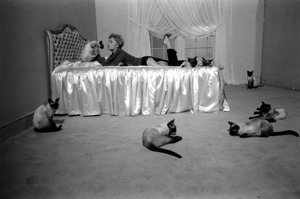 "Kim Novak playing with some Siamese cats that were used in one of her movies, ""Bell, Book and Candle,"" 1958."