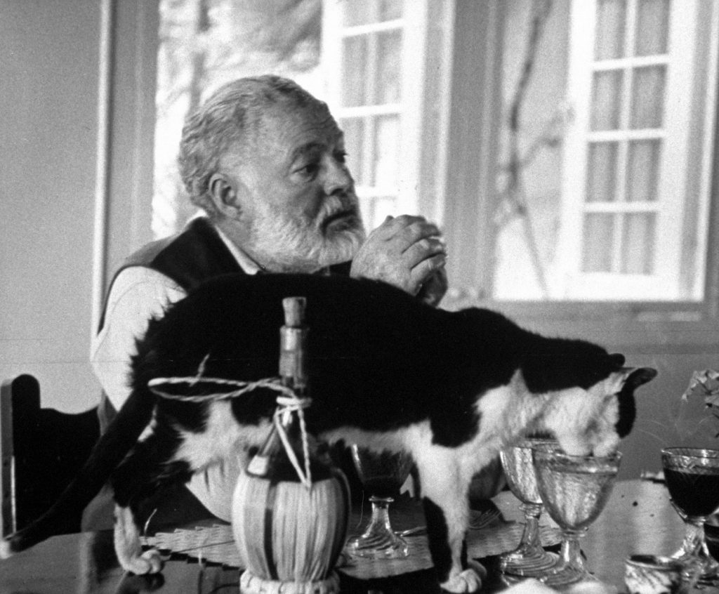 Ernest Hemingway sitting while a cat drinks out of a water glass on the table, 1959.