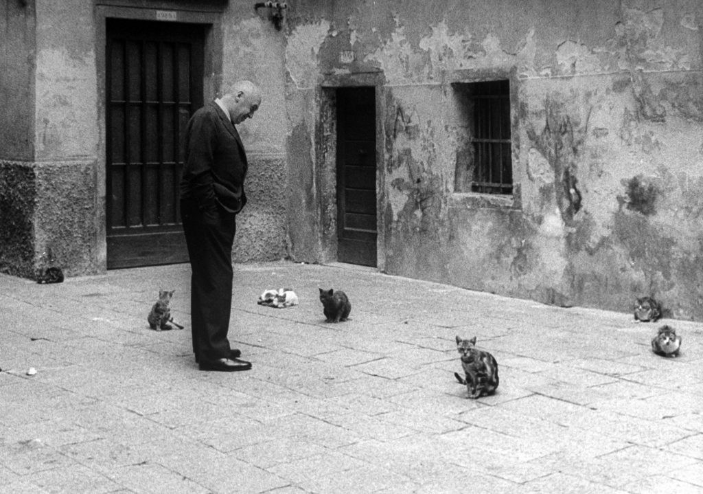 "Otto Preminger looking at stray cats on Venice street while attending Venice Film Festival at which his film ""Anatomy of a Murder"" was shown, 1959."