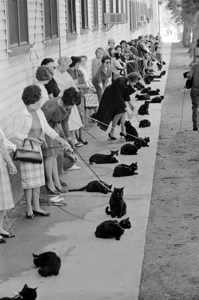 "Black cats and their owners in line for audition and casting for movie ""Tales of Terror,"" 1961."