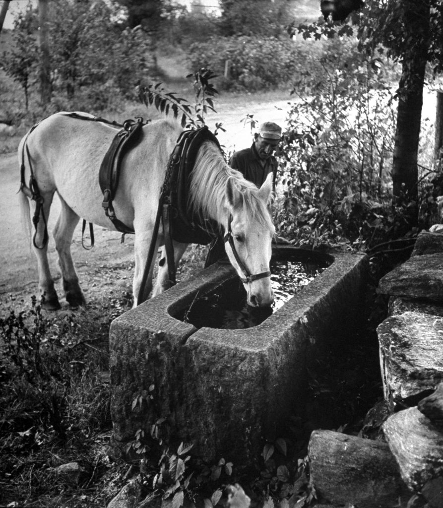 These horse didn't need anyone to make him drink, 1944.