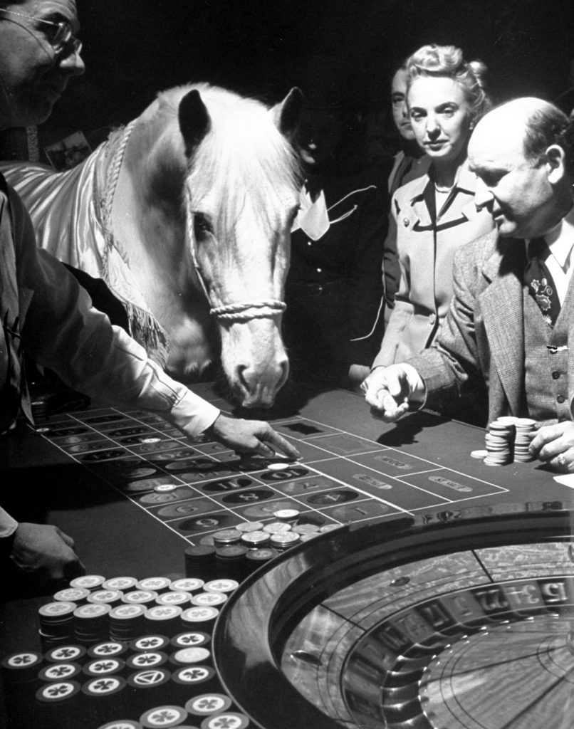 Lucky horse playing roulette in Las Vegas, 1947.
