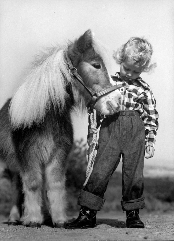 Child standing beside a miniature horse, showing size comparison, 1952.