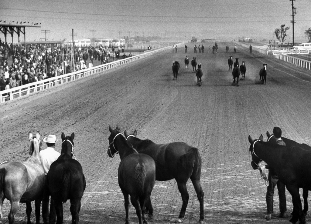 Baby horses scampering down the stretch at Los Alamitos track, 1952.